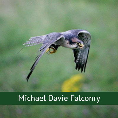 Micheal Davey Falconry