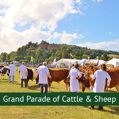 Grand Parade of Cattle & Sheep