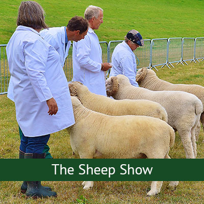 The Sheep Show
